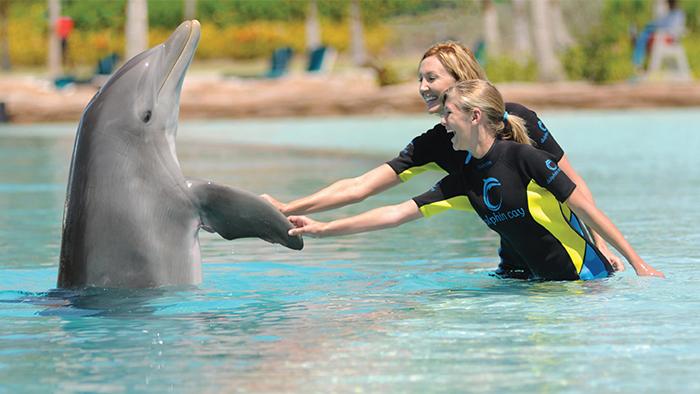 Dos huéspedes de Disney Cruise Line saludan a un amistoso delfín mano-a-aleta
